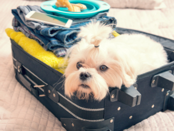 Is Your Pet Traveling With You?